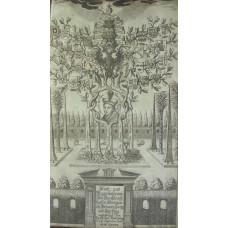 Stam[m]- und Regentenbaum der Durchleuchtigsten Herzogen Zu Braunschweig und Luneburg.