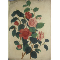 'Anemone flower'd or Waratah Camellia; Rose coloured or Middlemists Camellia' by Weddell.
