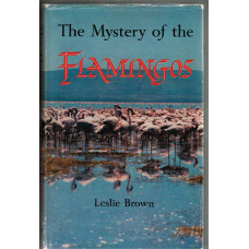The Mystery of the Flamingoes.