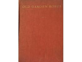 Old Garden Roses.