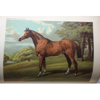The Book of the Horse: (Thorough-Bred, Half-Bred, Cart-Bred,) British and Foreign, With Hints on Horsemanship The Management of the Stable; Breeding, Breaking and Training for the Road, The Park, and the Field.